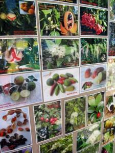 Witjuti Grub Bushfood Nursery