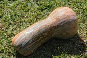 Gramma Pumpkin
